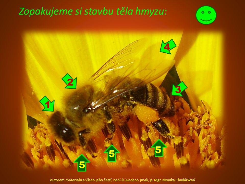 Zopakujeme si stavbu těla hmyzu: Autorem materiálu a všech jeho částí, není-li uvedeno jinak, je Mgr. Monika Chudárková 2 1 4 3 5 5 5