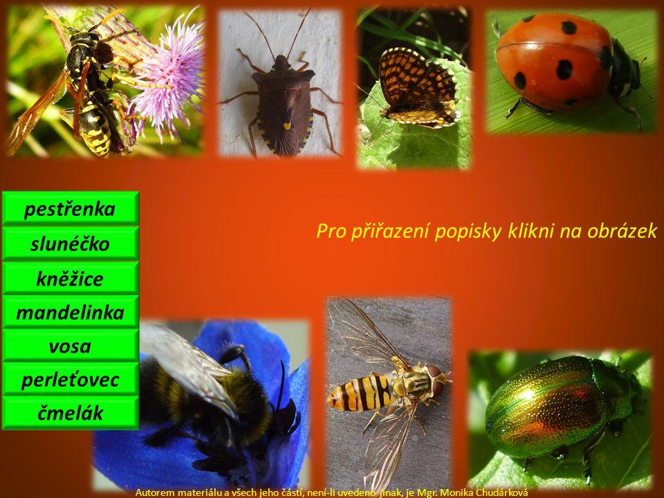 pestřenka slunéčko mandelinka kněžice perleťovec vosa čmelák Autorem materiálu a všech jeho částí, není-li uvedeno jinak, je Mgr. Monika Chudárková Pr