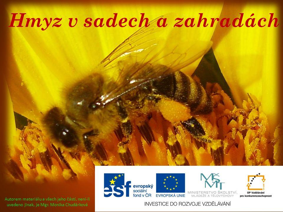 Hmyz v sadech a zahradách Autorem materiálu a všech jeho částí, není-li uvedeno jinak, je Mgr. Monika Chudárková