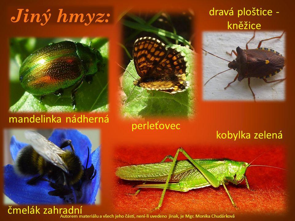 Jiný hmyz: mandelinka nádherná perleťovec čmelák zahradní kobylka zelená dravá ploštice - kněžice Autorem materiálu a všech jeho částí, není-li uveden