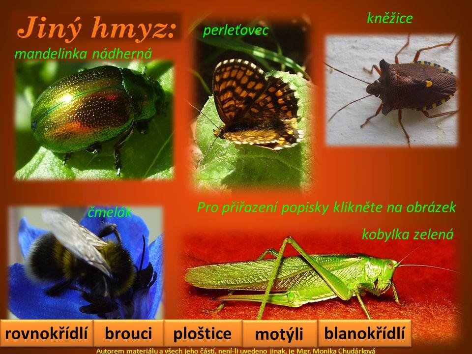 Jiný hmyz: mandelinka nádherná perleťovec kobylka zelená kněžice Autorem materiálu a všech jeho částí, není-li uvedeno jinak, je Mgr. Monika Chudárkov