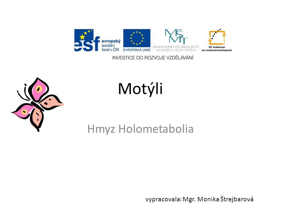 Motýli v ČR přes 2500 druhů larvy – housenky 2 páry křídel – kryty šupinkami – překrývají se dělení: denní a noční (podle aktivity) sosák Obr.