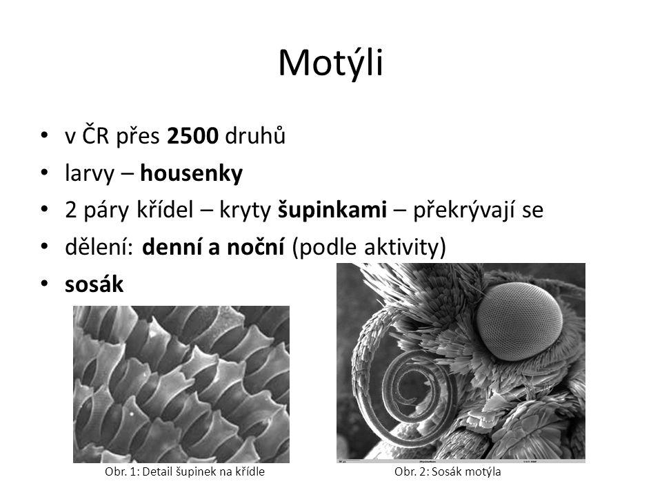 Motýli v ČR přes 2500 druhů larvy – housenky 2 páry křídel – kryty šupinkami – překrývají se dělení: denní a noční (podle aktivity) sosák Obr. 1: Deta