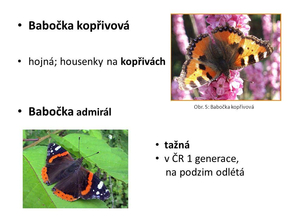Babočka kopřivová hojná; housenky na kopřivách Babočka admirál Obr. 5: Babočka kopřivová tažná v ČR 1 generace, na podzim odlétá