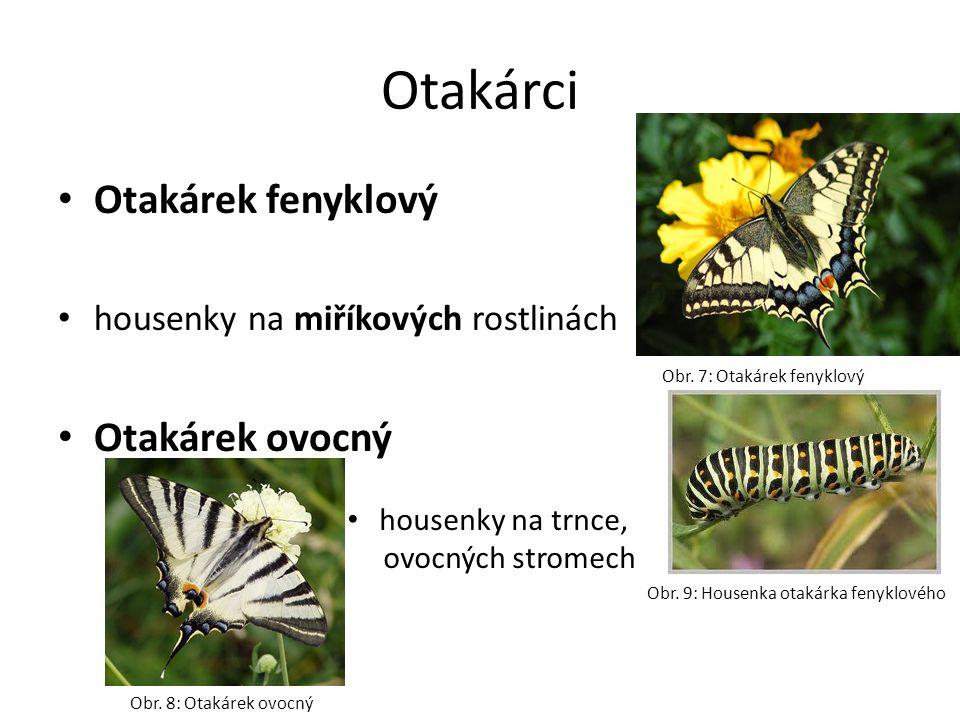 Otakárci Otakárek fenyklový housenky na miříkových rostlinách Otakárek ovocný housenky na trnce, ovocných stromech Obr. 7: Otakárek fenyklový Obr. 8: