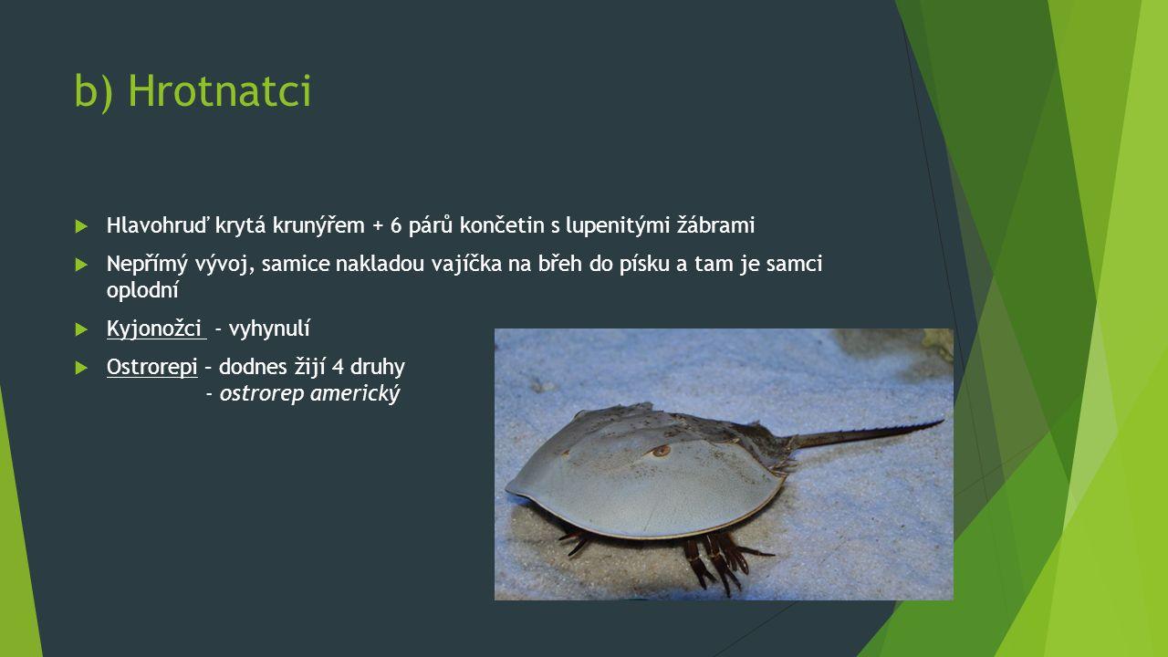 b) Hrotnatci  Hlavohruď krytá krunýřem + 6 párů končetin s lupenitými žábrami  Nepřímý vývoj, samice nakladou vajíčka na břeh do písku a tam je samci oplodní  Kyjonožci - vyhynulí  Ostrorepi – dodnes žijí 4 druhy - ostrorep americký