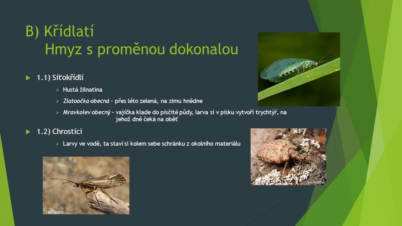 B) Křídlatí Hmyz s proměnou dokonalou  1.1) Síťokřídlí  Hustá žilnatina  Zlatoočka obecná – přes léto zelená, na zimu hnědne  Mravkolev obecný – vajíčka klade do písčité půdy, larva si v písku vytvoří trychtýř, na jehož dně čeká na oběť  1.2) Chrostíci  Larvy ve vodě, ta staví si kolem sebe schránku z okolního materiálu