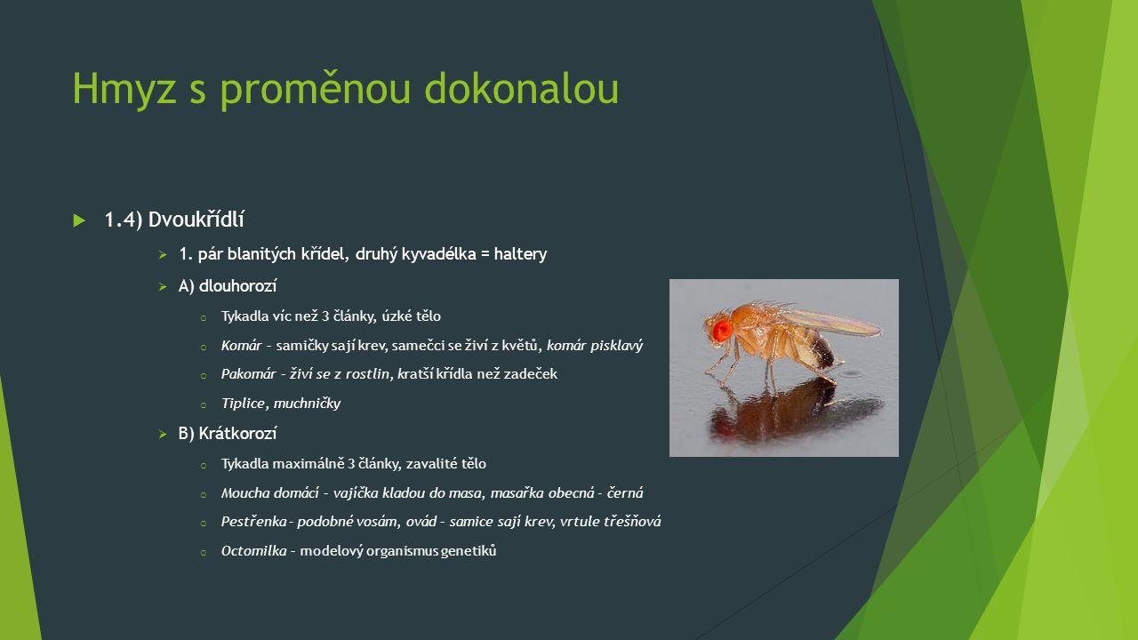 Hmyz s proměnou dokonalou  1.4) Dvoukřídlí  1. pár blanitých křídel, druhý kyvadélka = haltery  A) dlouhorozí o Tykadla víc než 3 články, úzké tělo