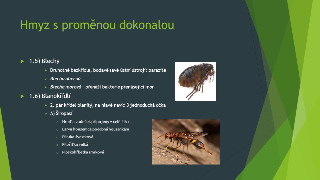 Hmyz s proměnou dokonalou  1.5) Blechy  Druhotně bezkřídlá, bodavě savé ústní ústrojí; parazité  Blecha obecná  Blecha morová – přenáší bakterie p