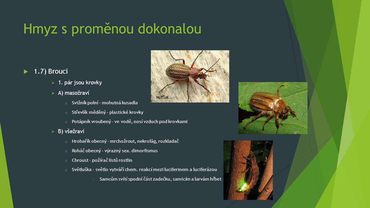 Hmyz s proměnou dokonalou  1.7) Brouci  1. pár jsou krovky  A) masožraví o Svižník polní – mohutná kusadla o Střevlík měděný – plastické krovky o P