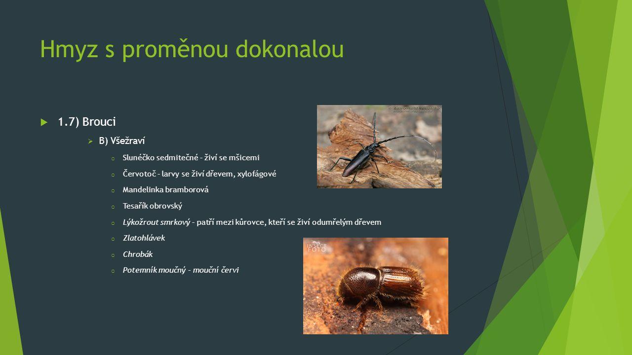 Hmyz s proměnou dokonalou  1.7) Brouci  B) Všežraví o Slunéčko sedmitečné – živí se mšicemi o Červotoč – larvy se živí dřevem, xylofágové o Mandelinka bramborová o Tesařík obrovský o Lýkožrout smrkový – patří mezi kůrovce, kteří se živí odumřelým dřevem o Zlatohlávek o Chrobák o Potemník moučný – mouční červi
