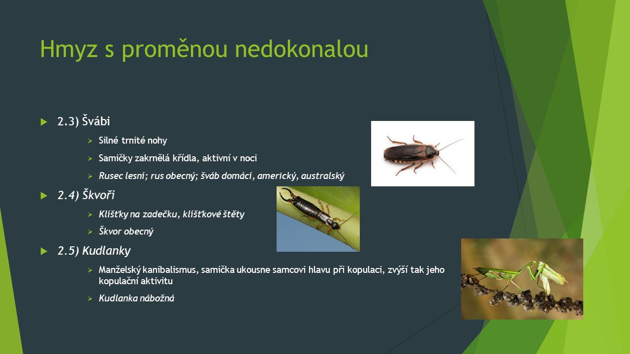 Hmyz s proměnou nedokonalou  2.3) Švábi  Silné trnité nohy  Samičky zakrnělá křídla, aktivní v noci  Rusec lesní; rus obecný; šváb domácí, americk