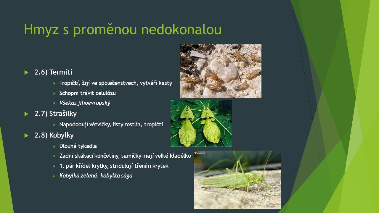 Hmyz s proměnou nedokonalou  2.6) Termiti  Tropičtí, žijí ve společenstvech, vytváří kasty  Schopni trávit celulózu  Všekaz jihoevropský  2.7) Strašilky  Napodobují větvičky, listy rostlin, tropičtí  2.8) Kobylky  Dlouhá tykadla  Zadní skákací končetiny, samičky mají velké kladélko  1.