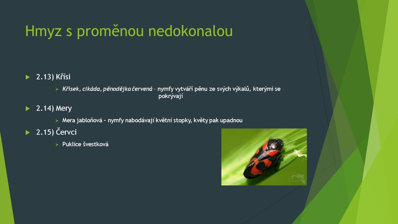 Hmyz s proměnou nedokonalou  2.13) Křísi  Křísek, cikáda, pěnodějka červená – nymfy vytváří pěnu ze svých výkalů, kterými se pokrývají  2.14) Mery