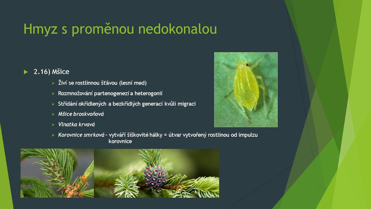 Hmyz s proměnou nedokonalou  2.16) Mšice  Živí se rostlinnou šťávou (lesní med)  Rozmnožování partenogenezí a heterogonií  Střídání okřídlených a