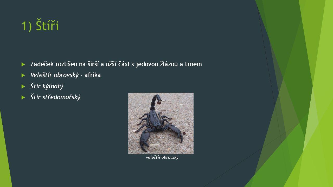 1) Štíři  Zadeček rozlišen na širší a užší část s jedovou žlázou a trnem  Veleštír obrovský - afrika  Štír kýlnatý  Štír středomořský veleštír obrovský