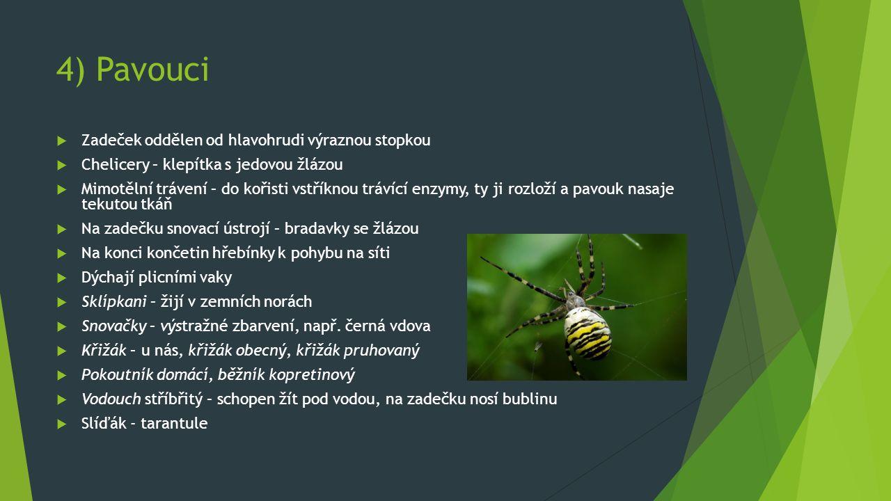 4) Pavouci  Zadeček oddělen od hlavohrudi výraznou stopkou  Chelicery – klepítka s jedovou žlázou  Mimotělní trávení – do kořisti vstříknou trávící enzymy, ty ji rozloží a pavouk nasaje tekutou tkáň  Na zadečku snovací ústrojí – bradavky se žlázou  Na konci končetin hřebínky k pohybu na síti  Dýchají plicními vaky  Sklípkani – žijí v zemních norách  Snovačky – výstražné zbarvení, např.