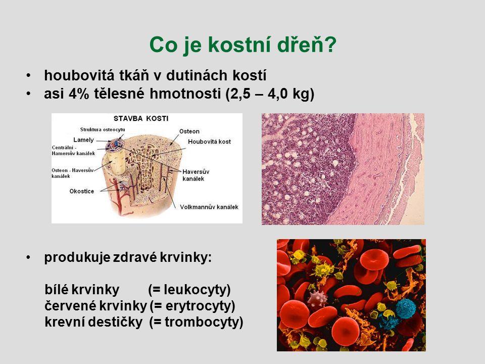 Co je kostní dřeň? houbovitá tkáň v dutinách kostí asi 4% tělesné hmotnosti (2,5 – 4,0 kg) produkuje zdravé krvinky: bílé krvinky (= leukocyty) červen