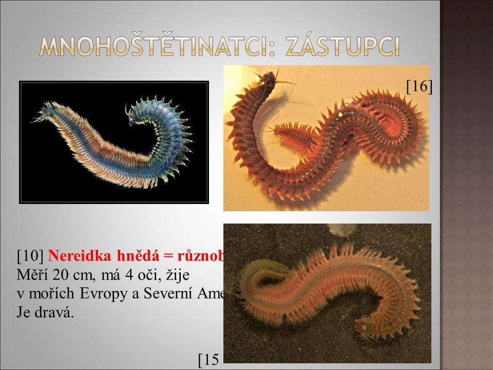[10] Nereidka hnědá = různobarvá Měří 20 cm, má 4 oči, žije v mořích Evropy a Severní Ameriky.