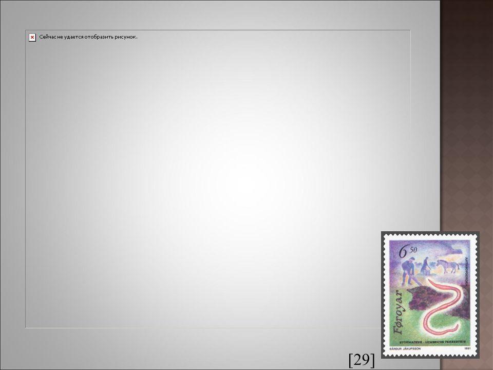 [12] [11] Palolo zelený Měří 30 cm, žije na korálových útesech Tichého oceánu.