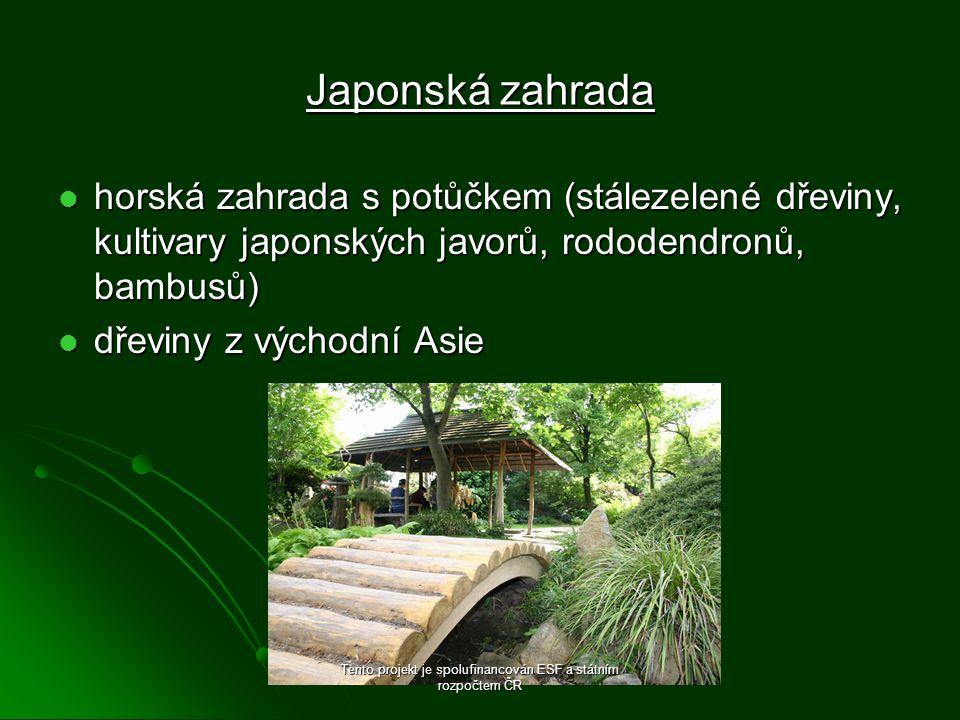 Japonská zahrada horská zahrada s potůčkem (stálezelené dřeviny, kultivary japonských javorů, rododendronů, bambusů) horská zahrada s potůčkem (stálezelené dřeviny, kultivary japonských javorů, rododendronů, bambusů) dřeviny z východní Asie dřeviny z východní Asie Tento projekt je spolufinancován ESF a státním rozpočtem ČR