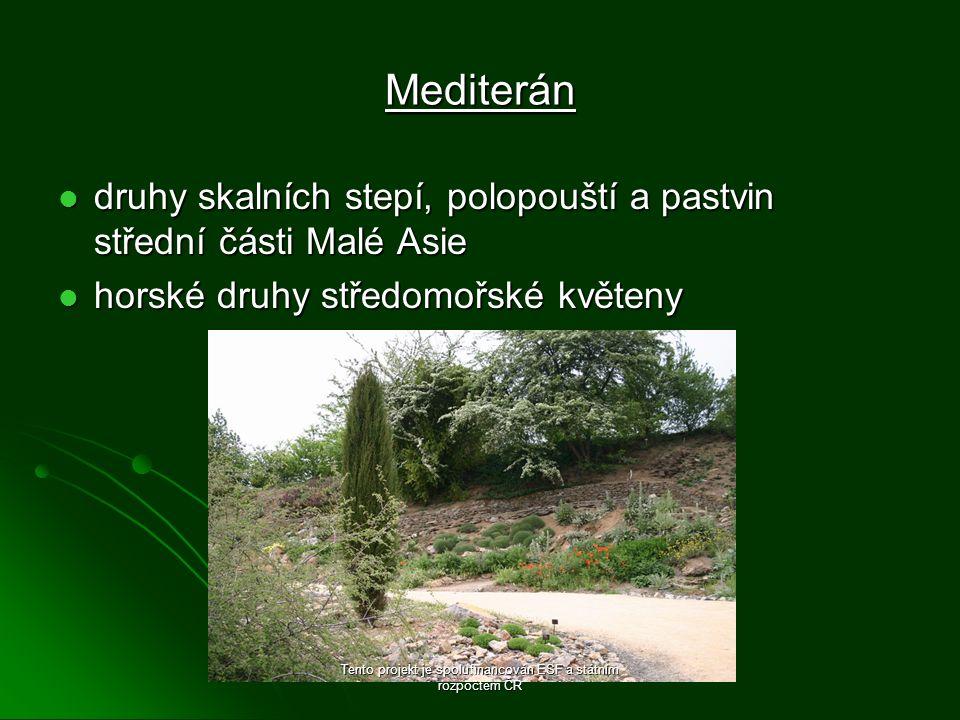 Mediterán druhy skalních stepí, polopouští a pastvin střední části Malé Asie druhy skalních stepí, polopouští a pastvin střední části Malé Asie horské