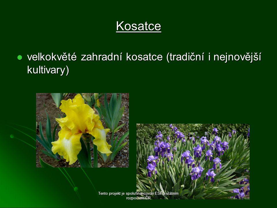 Kosatce velkokvěté zahradní kosatce (tradiční i nejnovější kultivary) velkokvěté zahradní kosatce (tradiční i nejnovější kultivary) Tento projekt je spolufinancován ESF a státním rozpočtem ČR