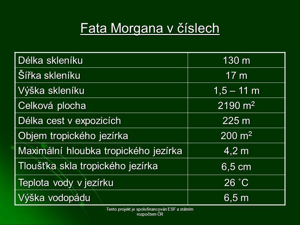 Fata Morgana v číslech Délka skleníku 130 m Šířka skleníku 17 m Výška skleníku 1,5 – 11 m Celková plocha 2190 m 2 Délka cest v expozicích 225 m Objem tropického jezírka 200 m 2 Maximální hloubka tropického jezírka 4,2 m Tloušťka skla tropického jezírka 6,5 cm Teplota vody v jezírku 26 ˚C Výška vodopádu 6,5 m Tento projekt je spolufinancován ESF a státním rozpočtem ČR