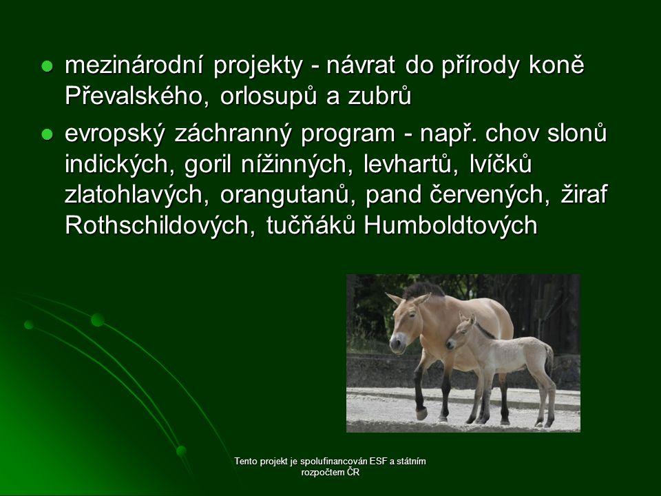 mezinárodní projekty - návrat do přírody koně Převalského, orlosupů a zubrů mezinárodní projekty - návrat do přírody koně Převalského, orlosupů a zubrů evropský záchranný program - např.