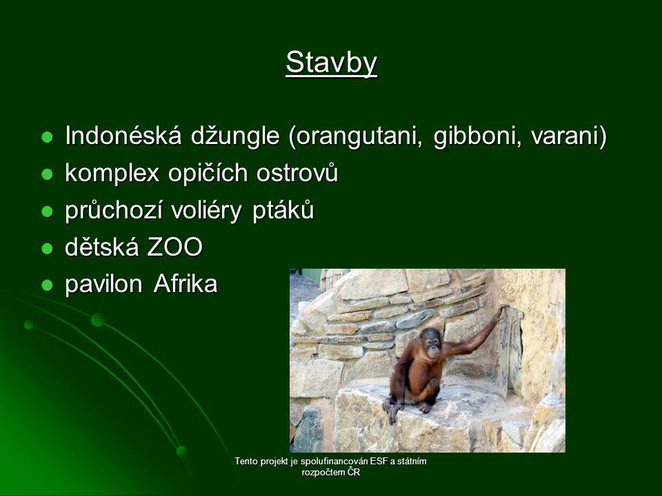 Stavby Indonéská džungle (orangutani, gibboni, varani) Indonéská džungle (orangutani, gibboni, varani) komplex opičích ostrovů komplex opičích ostrovů průchozí voliéry ptáků průchozí voliéry ptáků dětská ZOO dětská ZOO pavilon Afrika pavilon Afrika Tento projekt je spolufinancován ESF a státním rozpočtem ČR