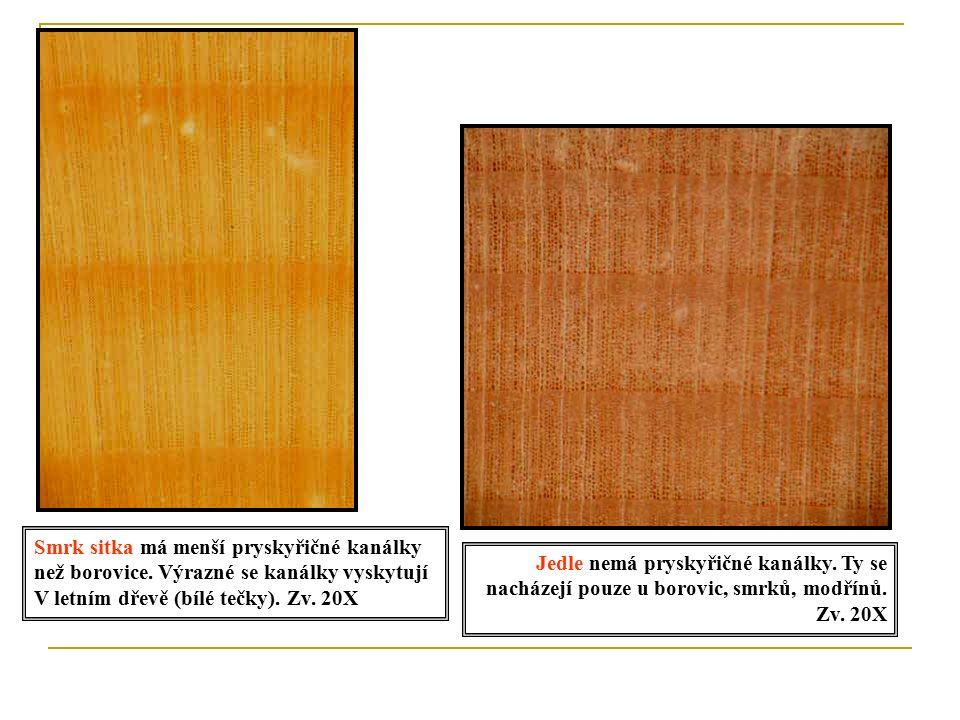 Jarní dřevo - tenké buněčné stěny, větší průměr buněk.