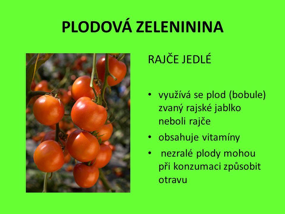 PLODOVÁ ZELENININA RAJČE JEDLÉ využívá se plod (bobule) zvaný rajské jablko neboli rajče obsahuje vitamíny nezralé plody mohou při konzumaci způsobit otravu