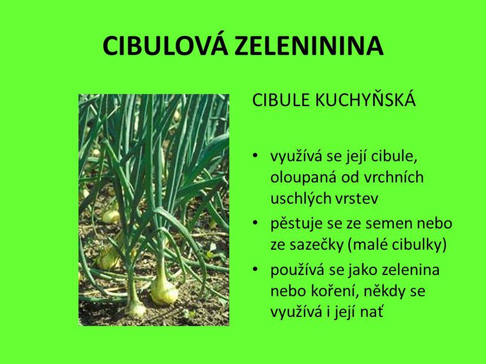 KOŠŤÁLOVÁ ZELENININA BRUKEV ZELNÁ (KVĚTÁK) květák vznikl vyšlechtěním divoké brukve zelené lidově je nazýván karfiol