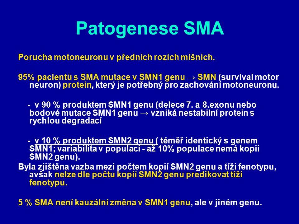 Patogenese SMA Porucha motoneuronu v předních rozích míšních. 95% pacientů s SMA mutace v SMN1 genu → SMN (survival motor neuron) protein, který je po