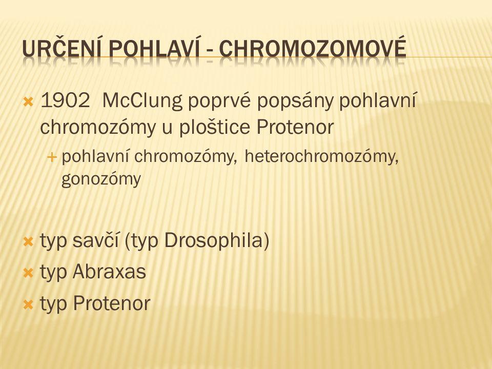  1902 McClung poprvé popsány pohlavní chromozómy u ploštice Protenor  pohlavní chromozómy, heterochromozómy, gonozómy  typ savčí (typ Drosophila)  typ Abraxas  typ Protenor