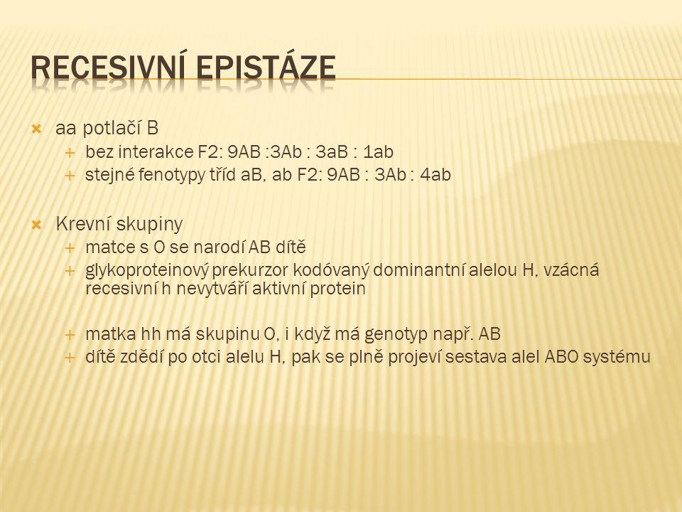  aa potlačí B  bez interakce F2: 9AB :3Ab : 3aB : 1ab  stejné fenotypy tříd aB, ab F2: 9AB : 3Ab : 4ab  Krevní skupiny  matce s O se narodí AB dítě  glykoproteinový prekurzor kodóvaný dominantní alelou H, vzácná recesivní h nevytváří aktivní protein  matka hh má skupinu O, i když má genotyp např.