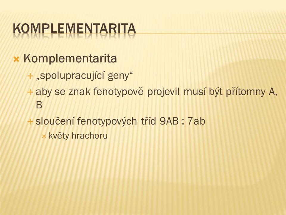 """ Komplementarita  """"spolupracující geny  aby se znak fenotypově projevil musí být přítomny A, B  sloučení fenotypových tříd 9AB : 7ab  květy hrachoru"""