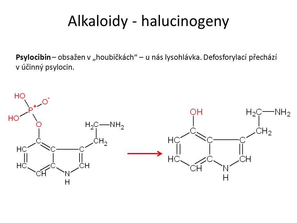 """Alkaloidy - halucinogeny Psylocibin – obsažen v """"houbičkách – u nás lysohlávka."""