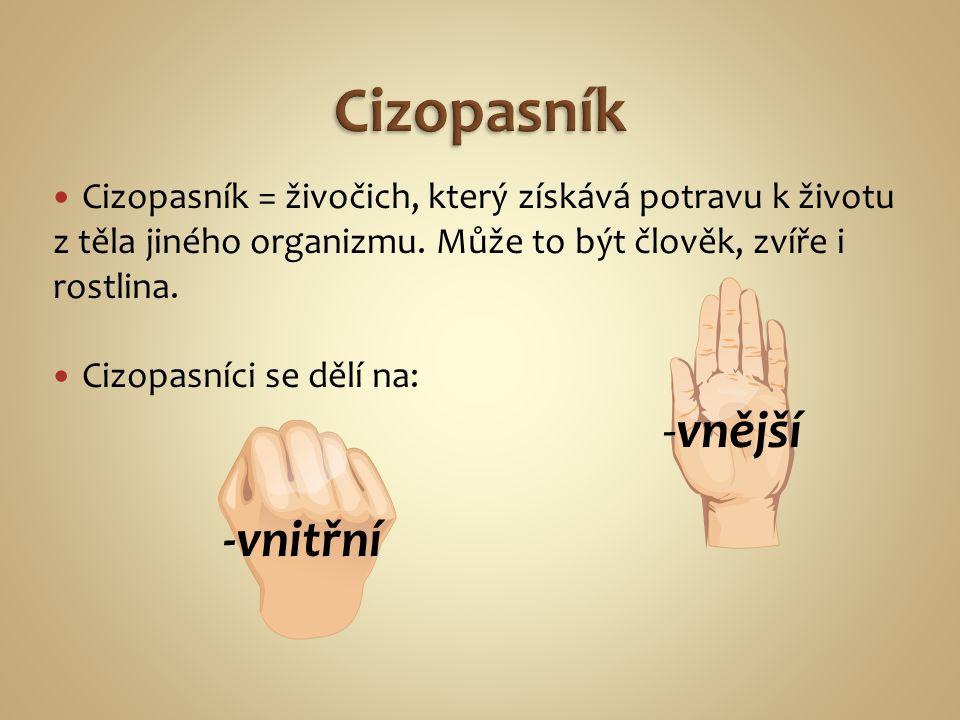 Cizopasník = živočich, který získává potravu k životu z těla jiného organizmu.