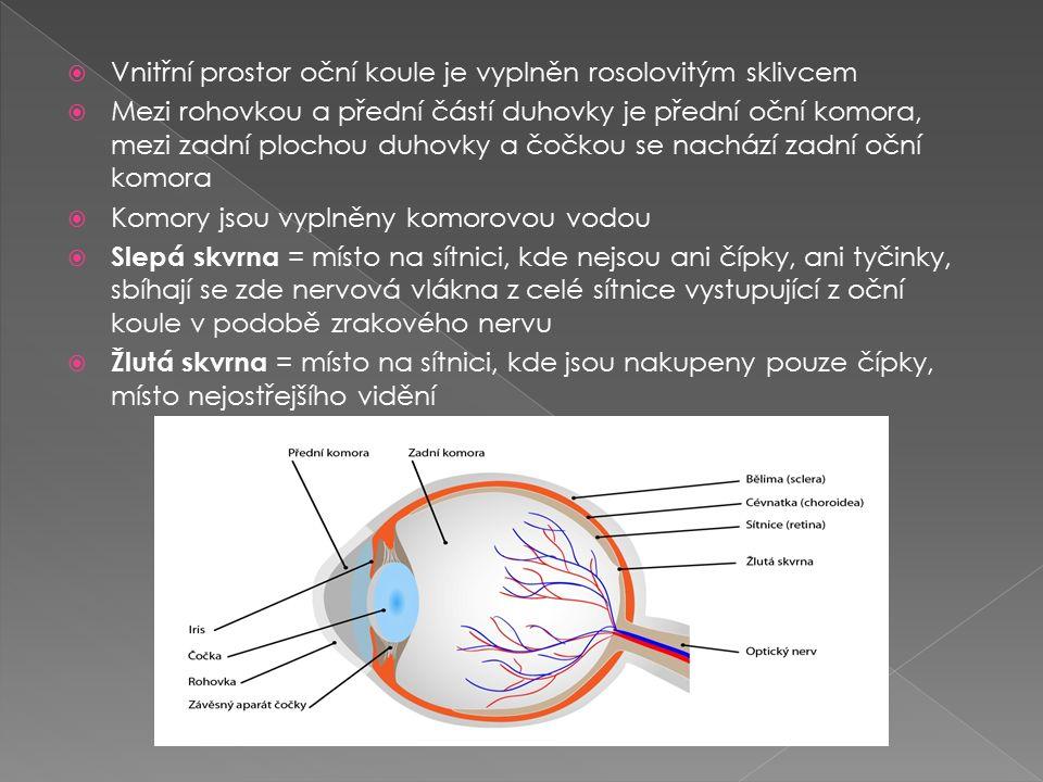  Vnitřní prostor oční koule je vyplněn rosolovitým sklivcem  Mezi rohovkou a přední částí duhovky je přední oční komora, mezi zadní plochou duhovky a čočkou se nachází zadní oční komora  Komory jsou vyplněny komorovou vodou  Slepá skvrna = místo na sítnici, kde nejsou ani čípky, ani tyčinky, sbíhají se zde nervová vlákna z celé sítnice vystupující z oční koule v podobě zrakového nervu  Žlutá skvrna = místo na sítnici, kde jsou nakupeny pouze čípky, místo nejostřejšího vidění