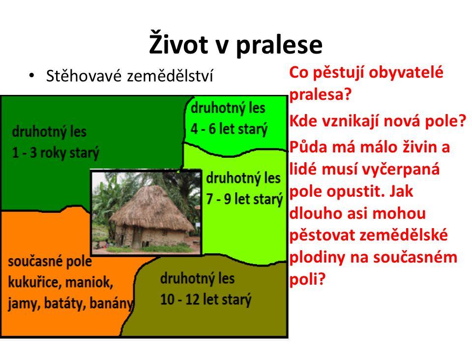 Život v pralese Stěhovavé zemědělství Co pěstují obyvatelé pralesa.