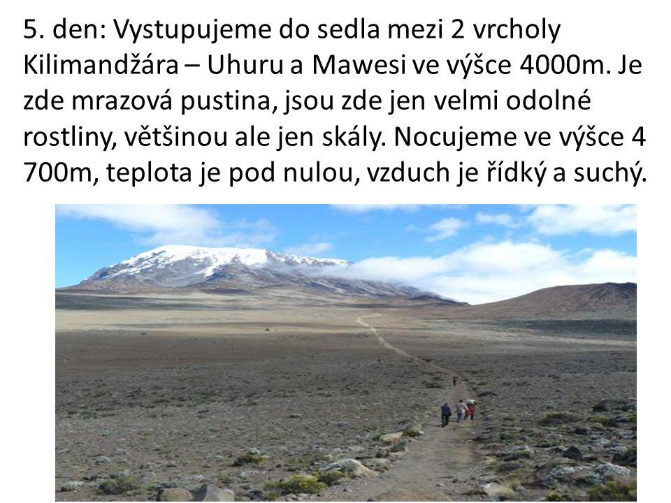 5. den: Vystupujeme do sedla mezi 2 vrcholy Kilimandžára – Uhuru a Mawesi ve výšce 4000m.