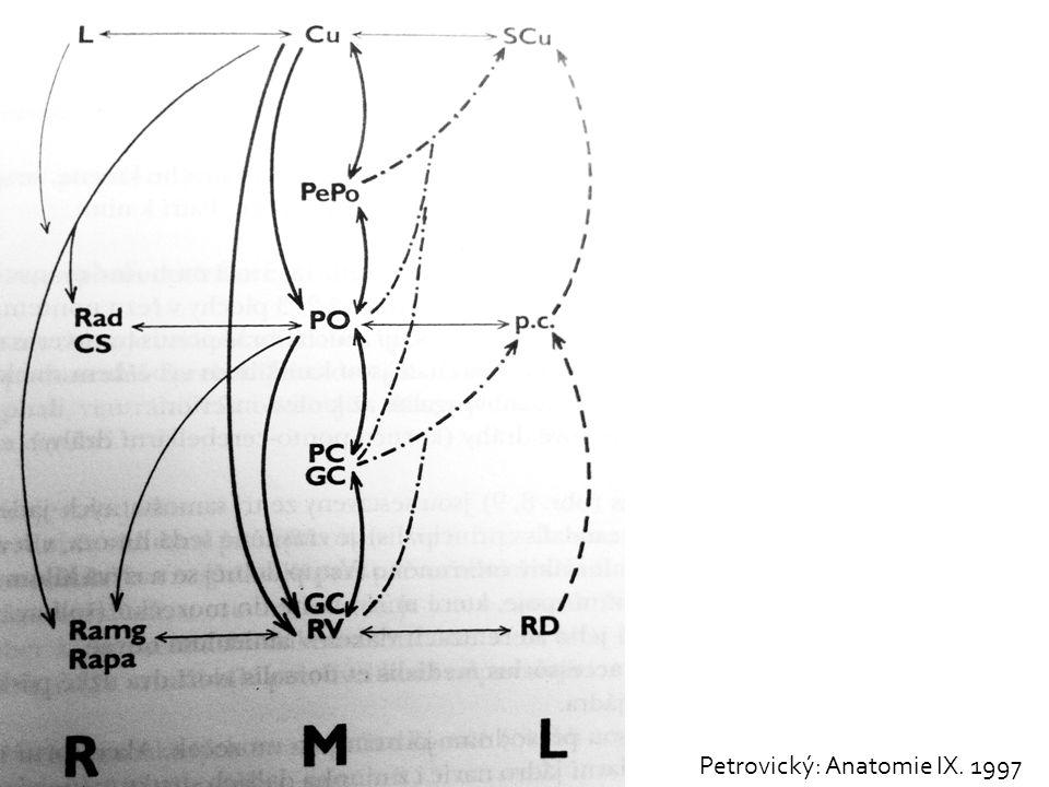  Stimulus  Poklep na glabelu  Odpověď (kdy je výbavný):  Bilaterální mrknutí  Význam  Nevýbavný při lézi diencefalicko- mezencefalického přechodu  CAVE  Mizí i při lehčí sedaci