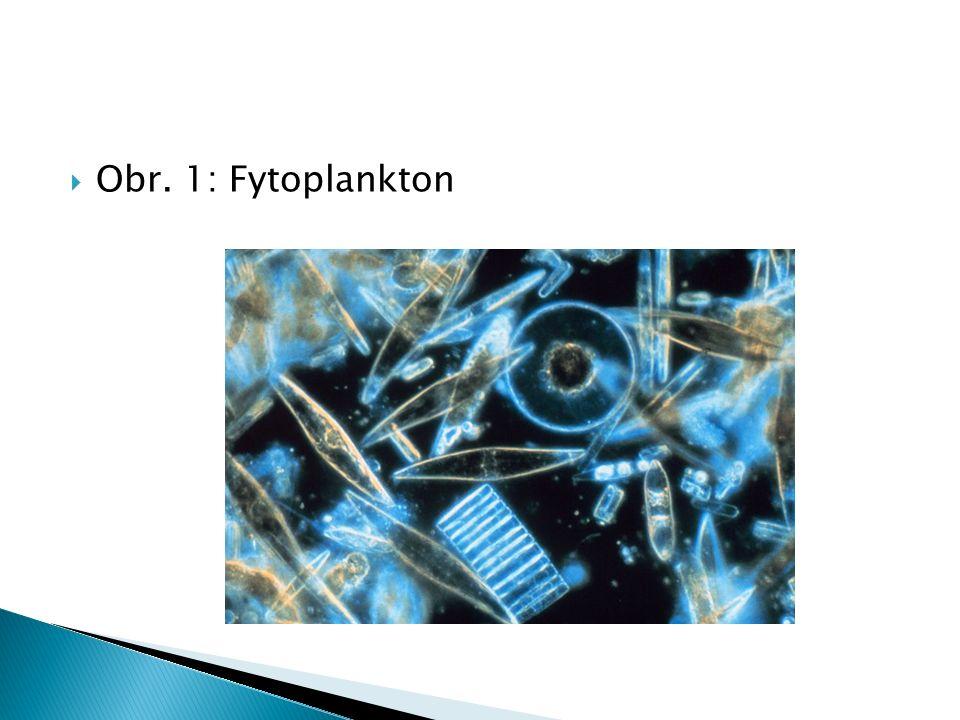  Obr. 1: Fytoplankton