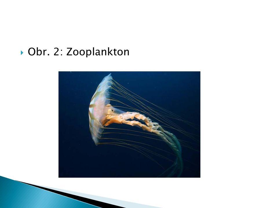  Obr. 2: Zooplankton