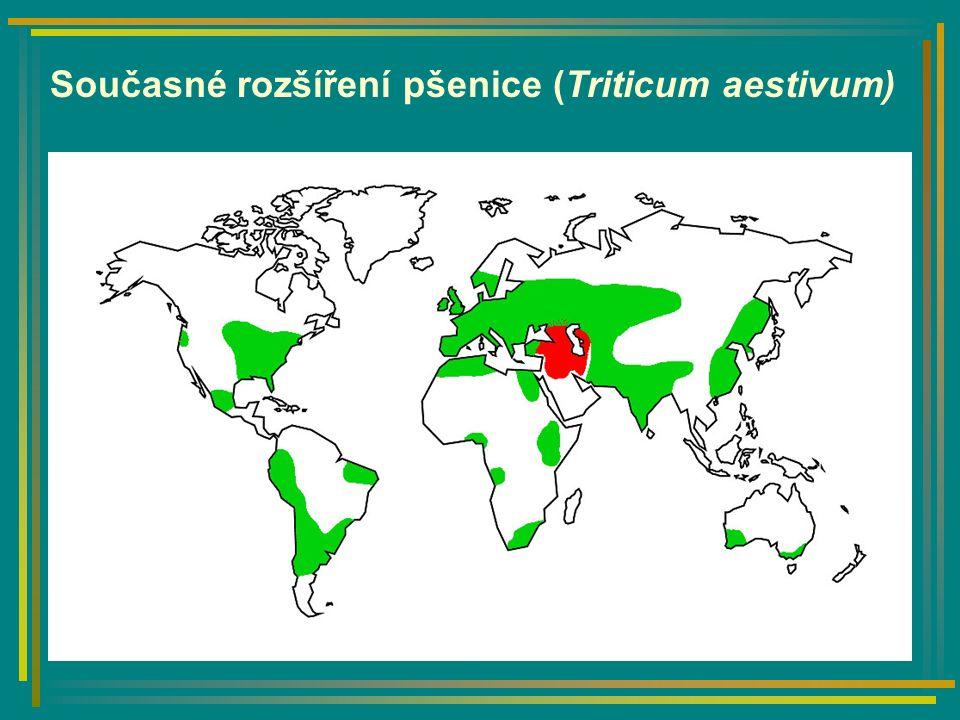 Současné rozšíření pšenice (Triticum aestivum)
