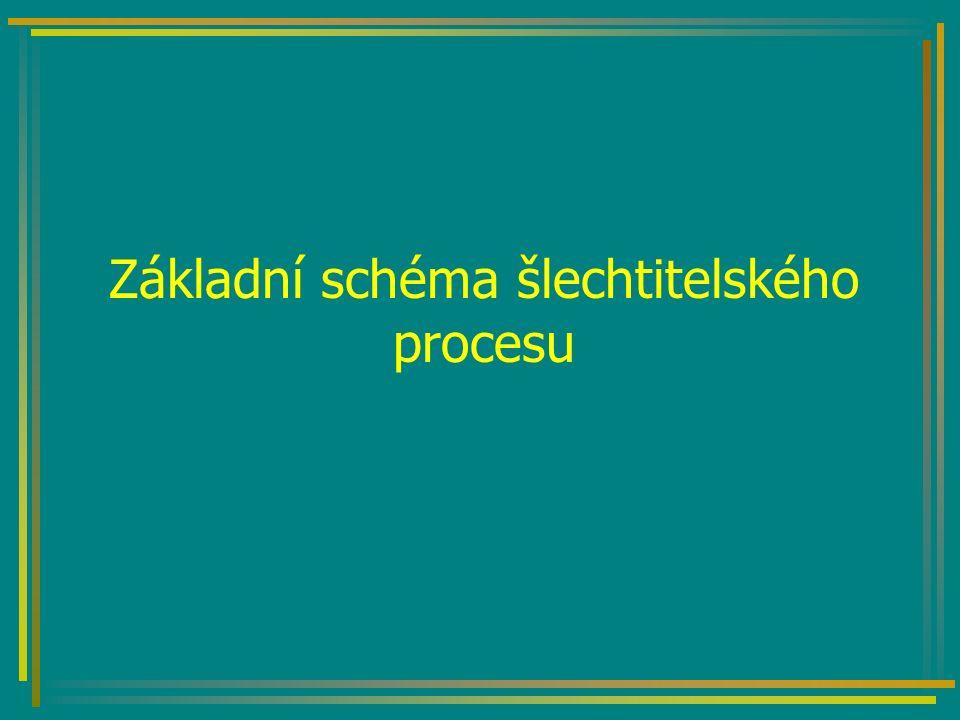 Základní schéma šlechtitelského procesu