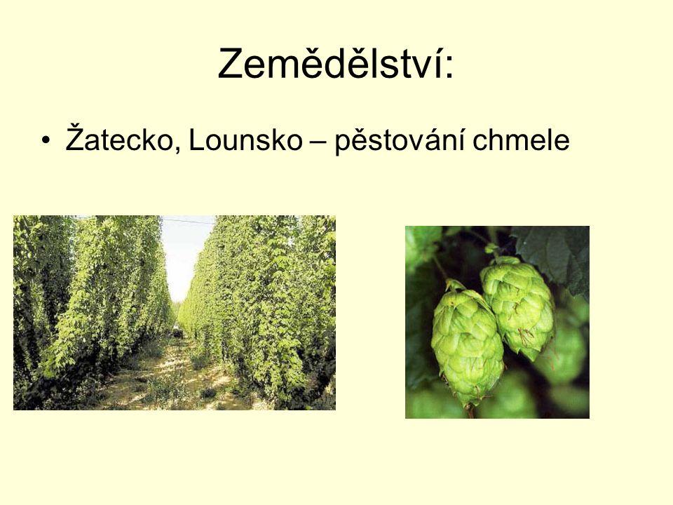 Zemědělství: Žatecko, Lounsko – pěstování chmele