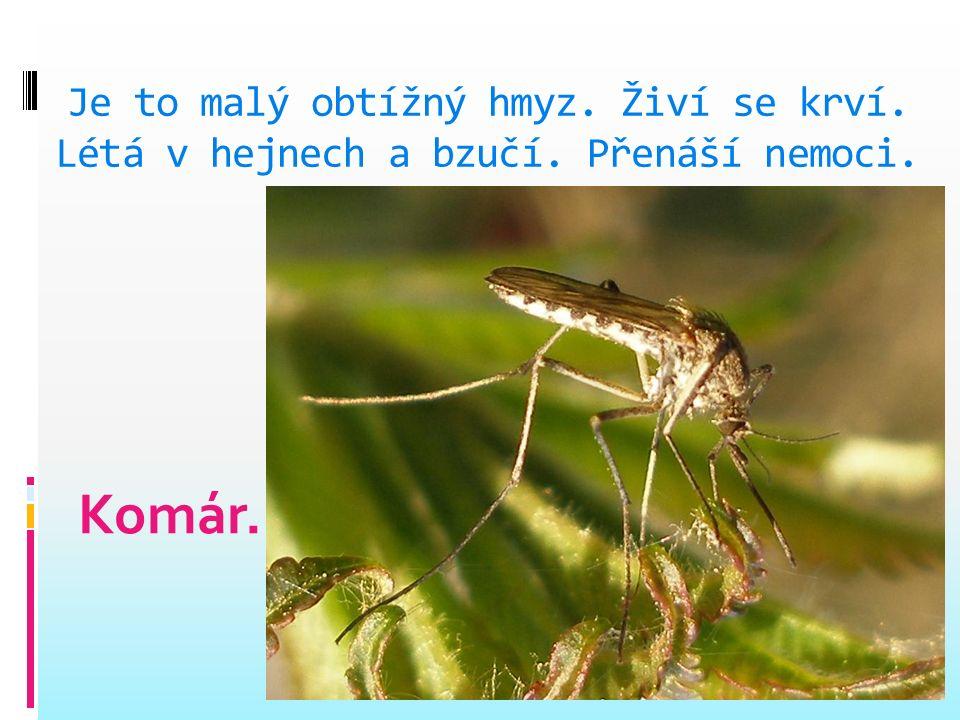 Je užitečný, loví hmyz. Někteří lidé se ho bojí, štítí.