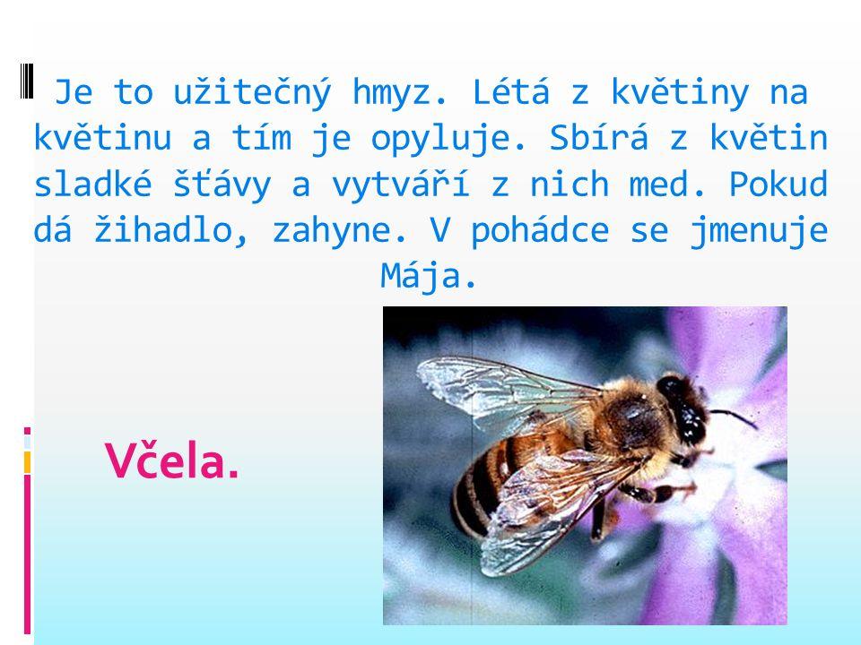 Je to savec. Živí se hmyzem. Přední končetiny má přeměněny v křídla. Umí létat. Spí hlavou dolů, zimu přečká zimním spánkem. Netopýr.